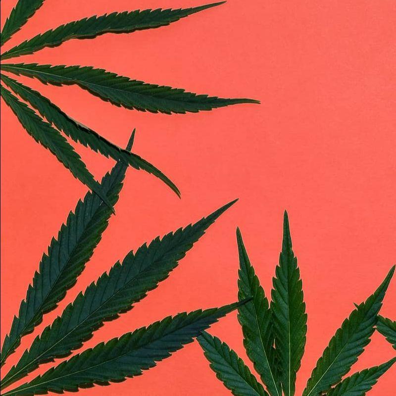 Cannabis Place Australia